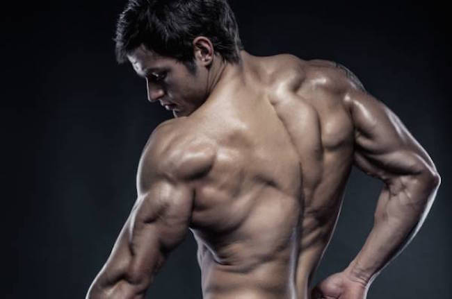 Best muscle fat burner supplement